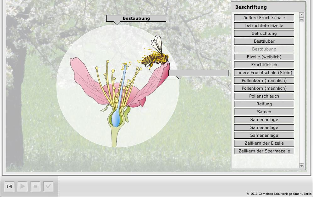 reihe biosph re titel bl tenpflanzen von der bl te